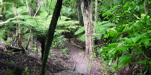 Maori Pipi Walk - Leroys Bush